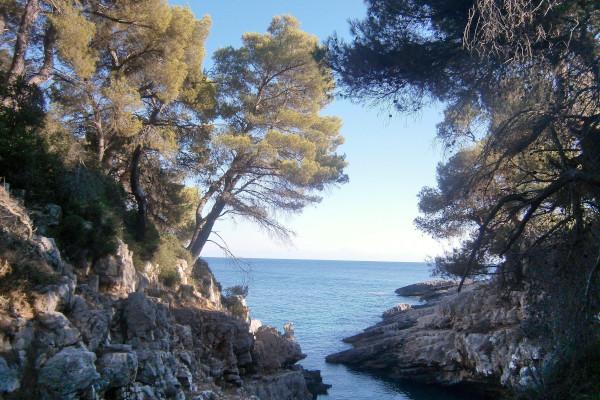The dense vegetation of the green island of Alonissos reaches the rocky coastline.