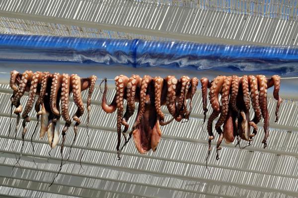 Octopuses drying in Antiparos.