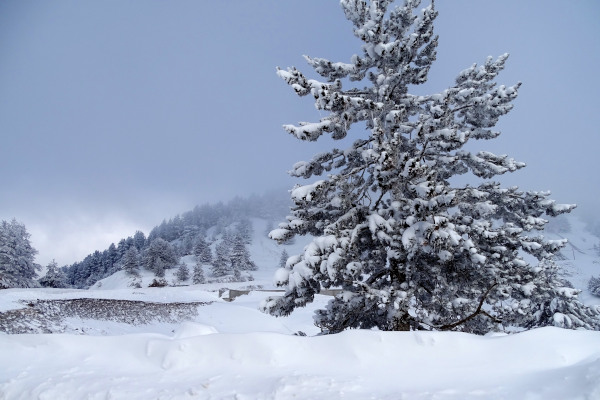 Snowy tree in the foggy and snowy landscape of the Anilio Ski Center.