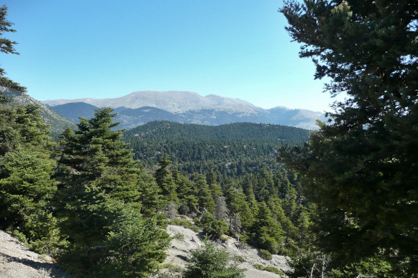 A view from the international hiking path E4 that connects Delphi to Korikion Cave.
