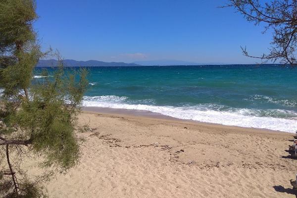 A photo of the Ierissos sandy beach taken among the trees that reach the coast.