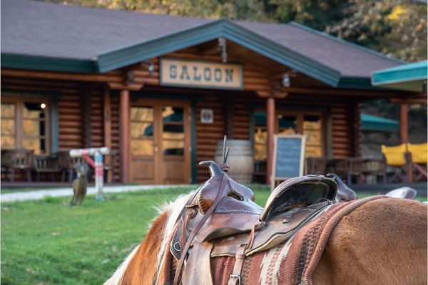 One of the park's riding horses and the main entrance at the cafeteria of Saloon Park in Karpenisi.