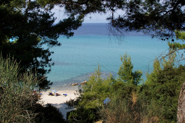 A photo taken between the pine trees shows one part of the Kriopigi Beach of Halkidiki.