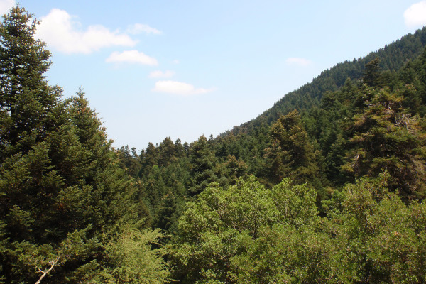 A picture showing the dense vegetation of the Mount Ainos National Park on Kefalonia island.
