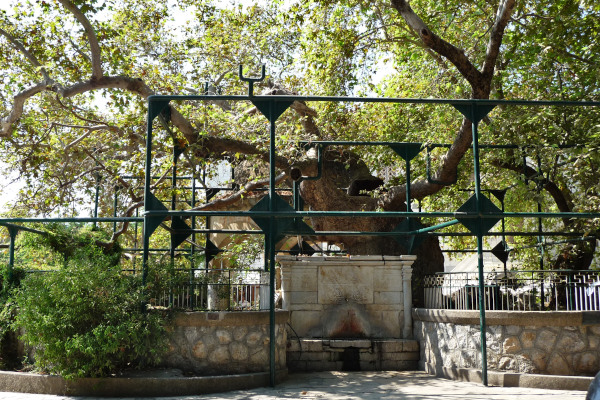 The plane tree of Hippocrates in the Platanou Square, in Kos Town.