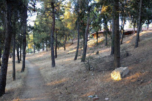 A narrow trail among the pine trees at the hill of St. Loukas in Lamia.