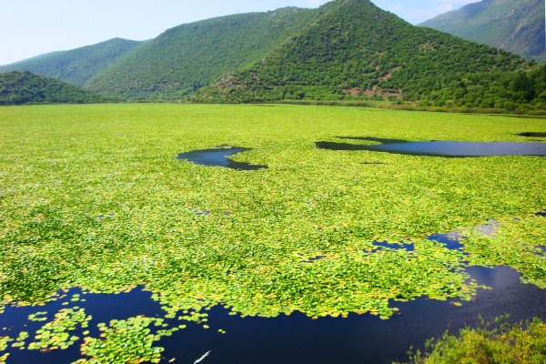 An overview of the Kalodiki Swamp full of water lilies among the surrounding mountains.