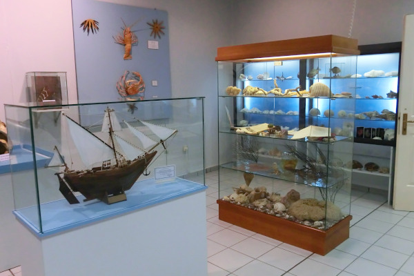 A photo showing exhibits in displays in a room of the Aegean Natural History Museum in Mitilinii of Samos.