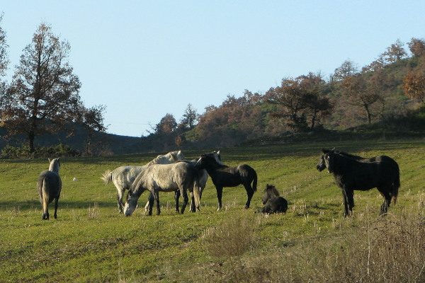 Horses in a green field surrounded by trees.