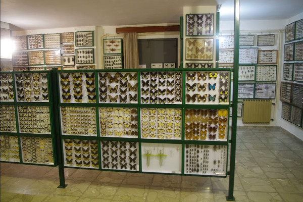 The interior of the Entomological Museum of Volos with numerous insects as exhibits in displays.