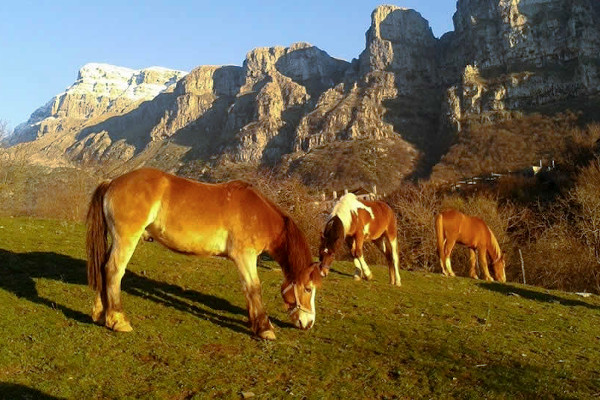 Horses graze on a meadow located on a plateau of the Pindus area.